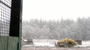 Freak snowfall, taken at the clay range. We aren't fair weather shooters anyway!
