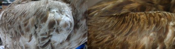 Before and After: Wing Re-Colouring